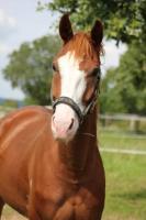 Bric-à-brac... présentation écurie, chevaux, poneys...