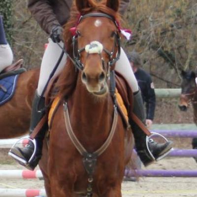 CSO Erstein 11.03.2012